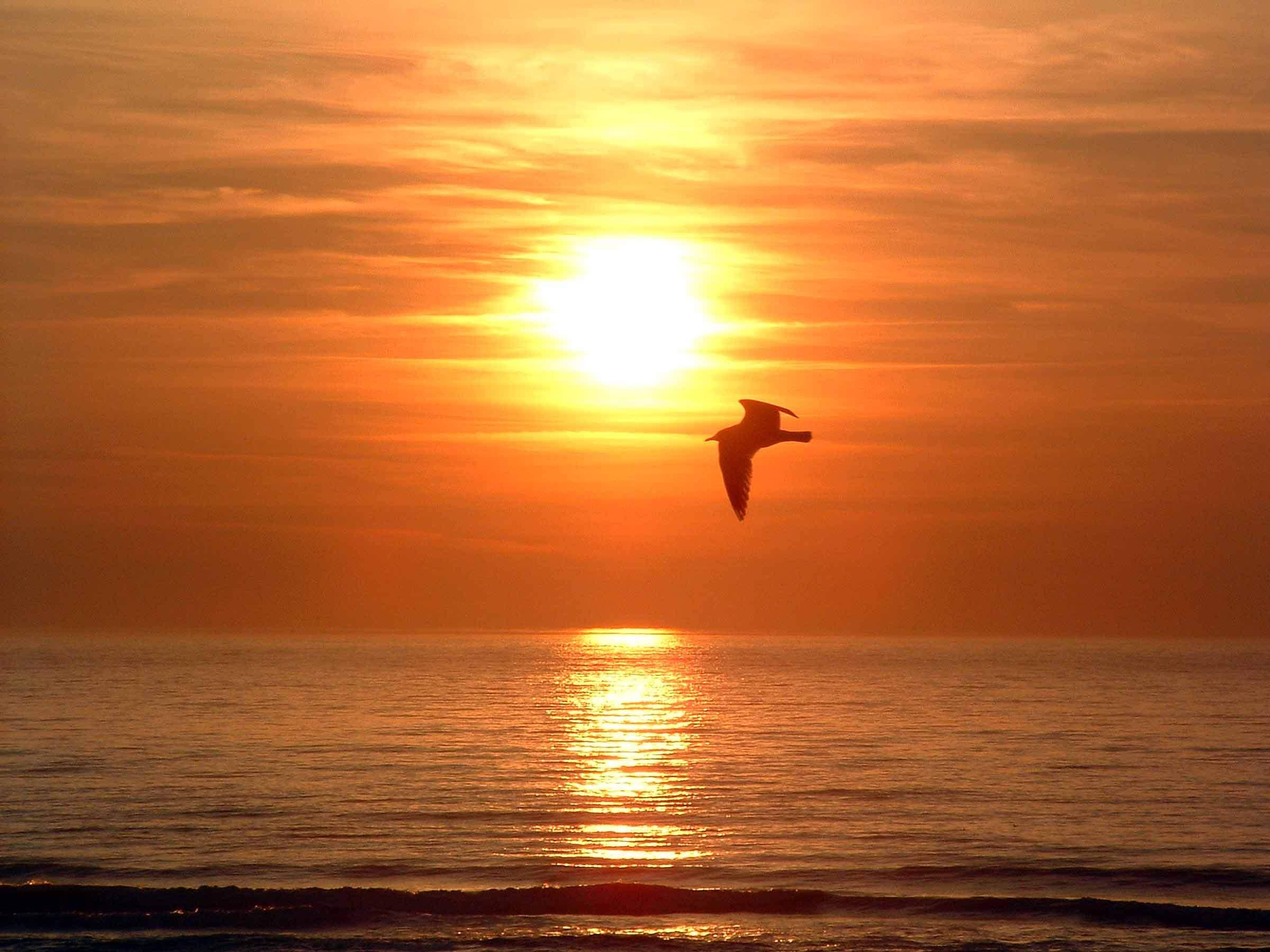mouette et coucher de soleil