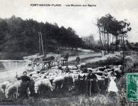 022-les-moutons-aux-sapins